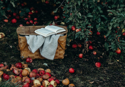 The Orchard At Home: We'll Tell You How You Can Make It