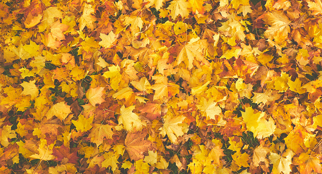 Oliva Nova en otoño